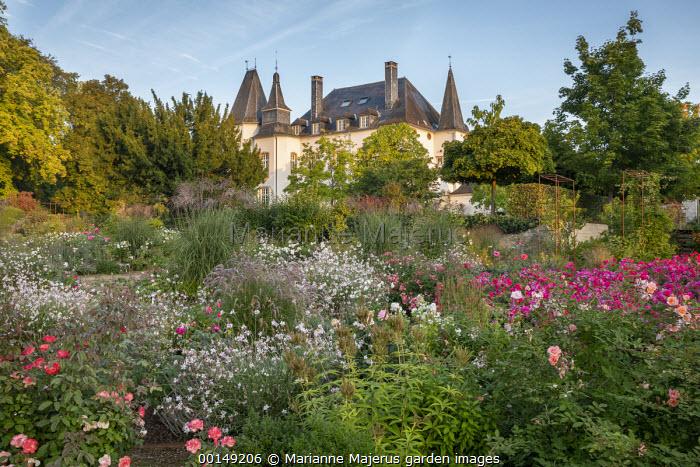 Path through rose garden, Gaura lindheimeri, miscanthus, pennisetum, Veronicastrum virginicum 'Album' seedheads