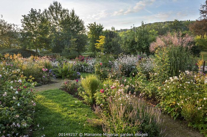 Roses, Gaura lindheimeri, pennisetum, miscanthus, Veronicastrum virginicum 'Album' seedheads, Anemone × hybrida 'Honorine Jobert'