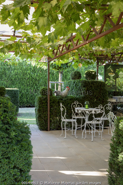 White metal table and chairs on patio under grape vine trained over pergola, topiarised yew hedge enclosure