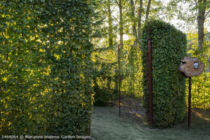 Metal gates into hornbeam hedge enclosure