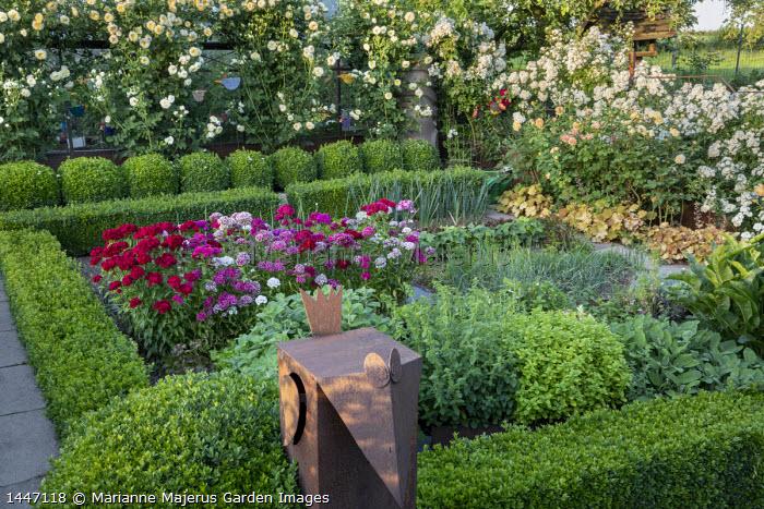 Dianthus barbatus and herbs in box hedge enclosure, Rosa 'The Pilgrim' climbing over screen