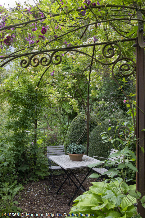 Table and chairs under rose arbour, hosta in container, clipped Buxus sempervirens, Rosa 'Veilchenblau', Rosa 'Goldfinch'