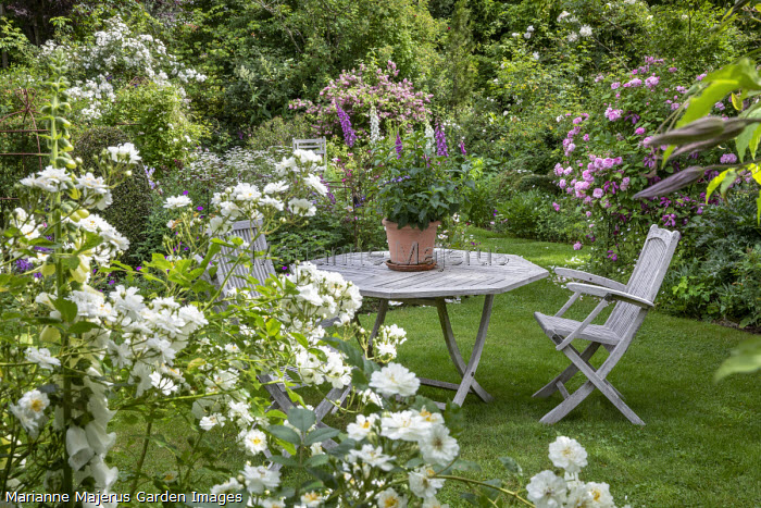 Table and chairs on lawn in rose garden, Rosa 'Guirlande d'Amour', Rosa 'Ispahan', Digitalis purpurea