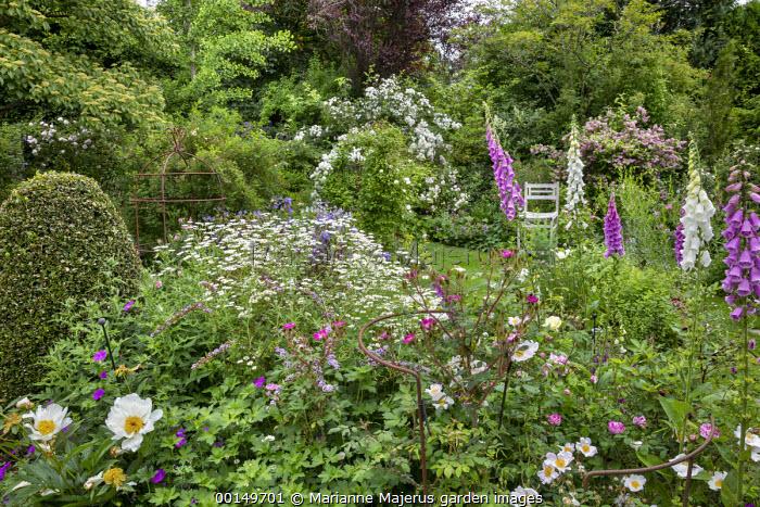 Peonies, geraniums, Rosa 'Rambling Rector', Rosa x richardii, Digitalis purpurea, leucanthemum