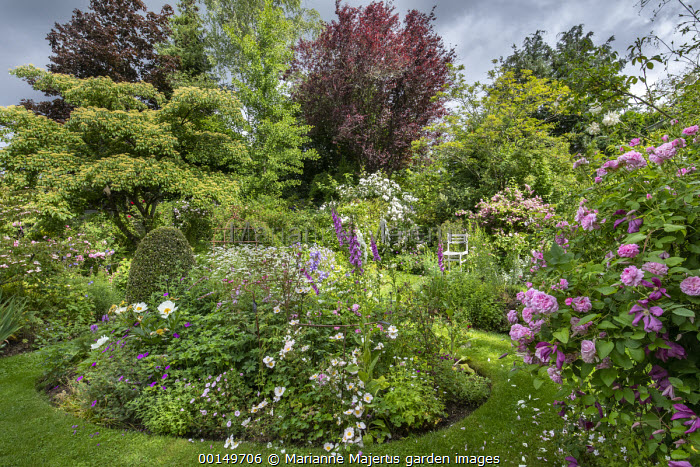 Circular border, grass path, roses, foxgloves