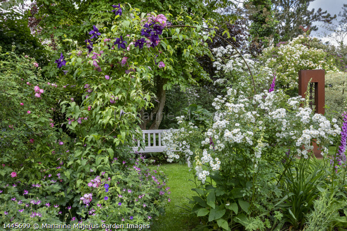 Clematis and roses climbing over arch, wooden bench, Rosa 'Guirlande d'Amour'