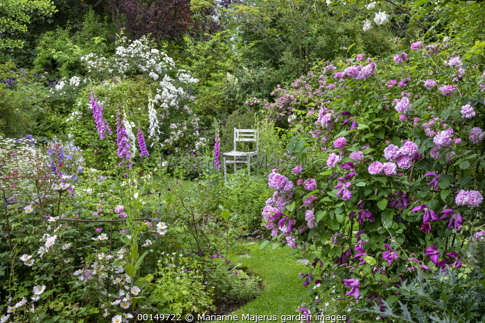 Cottage garden, foxgloves, geraniums, roses, wooden chair