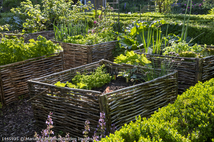 Kitchen garden, woven willow raised beds, chives, lettuces, parsley