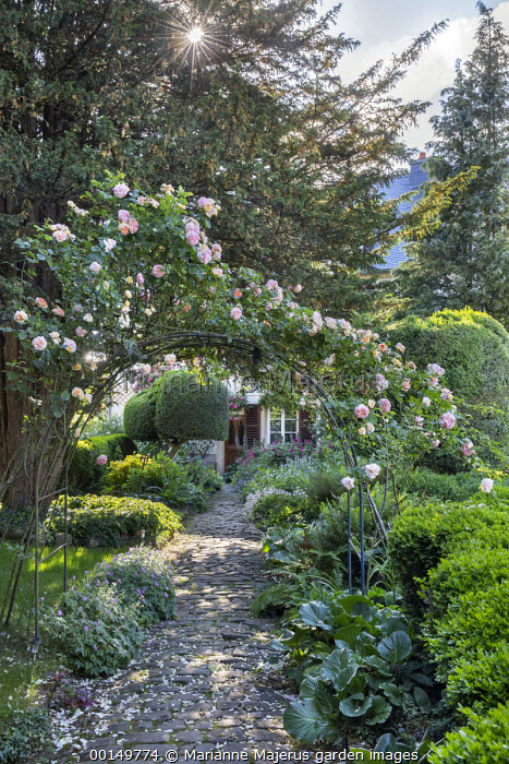 Rosa 'Alchymist' on arch, cobbled path to house, bergenia, geraniums
