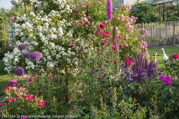 Rosa 'Guirlande d'Amour', Rosa 'Gardens of Hex', metal plant support, foxglove, alliums, ducks on lawn, salvia