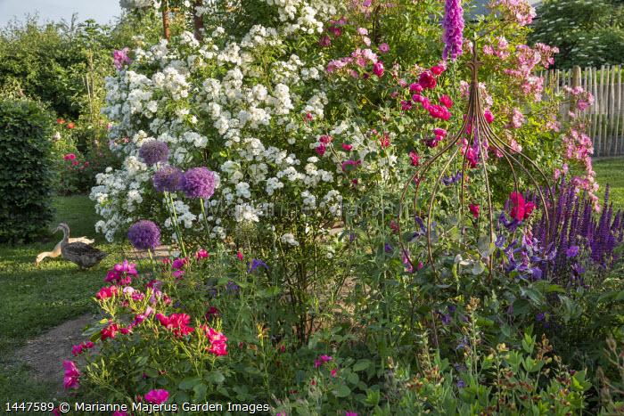 Roses, metal plant support, foxglove, alliums, ducks on lawn, salvia