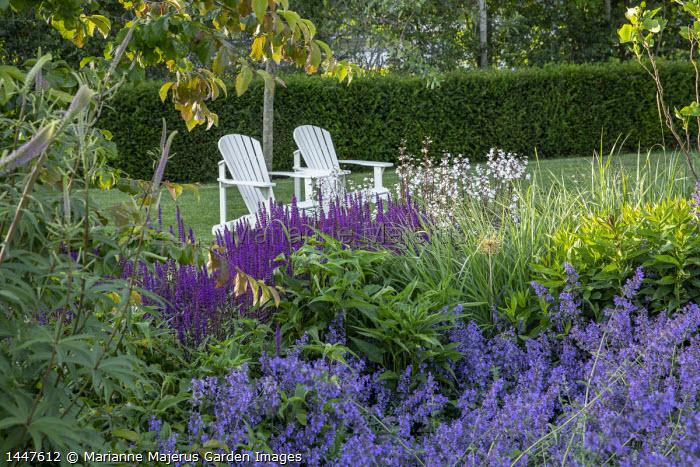 Wooden Adirondack chairs on lawn, salvia, nepeta, penstemon