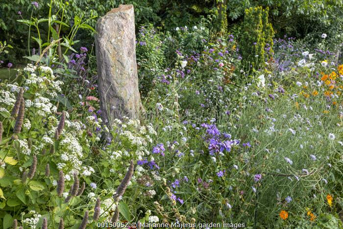 Standing stone in border, Ageratina altissima, phlox, agastache, Knautia arvensis, Verbena bonariensis, Echinacea purpurea