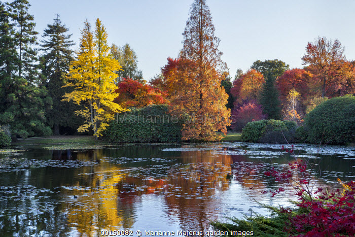 View across lake to Sheffield Park House, reflections, Nyssa sylvatica, Taxodium distichum, Ginkgo biloba