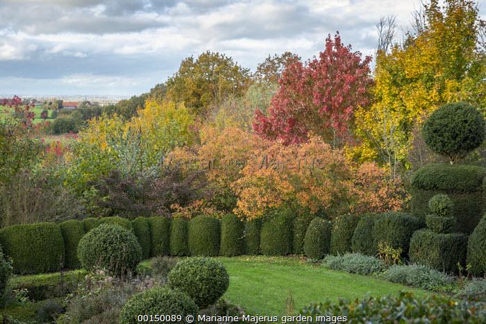 Clipped box hedge and yew topiary, amelanchier, prunus, liquidambar, acer