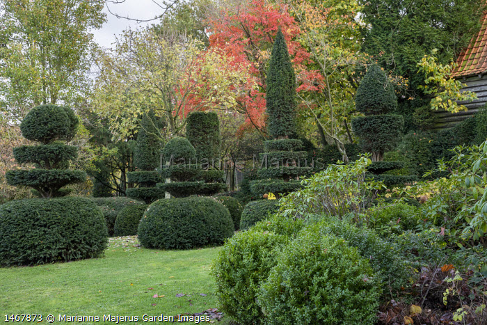 Clipped yew topiary and box balls