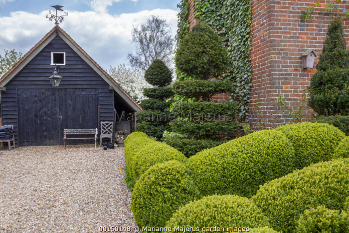 Clipped box topiary, yew spiral, gravel driveway, timber garage
