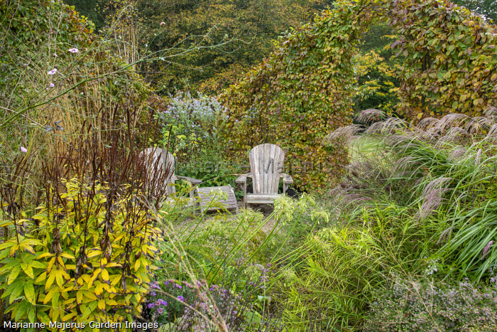 Agapanthus purple seedling, Veronicastrum 'Adoration', wooden chairs, clipped arch in beech hedge