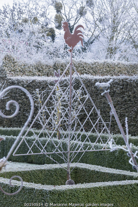 Triangular plant support, clipped box hedge edging
