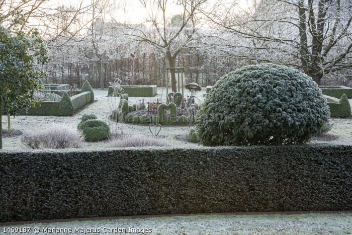 View across yew hedge, clipped Prunus lusitanica, metal bird and fence ornaments in border around tree, clipped Buxus sempervirens hearts