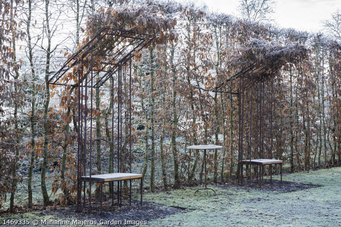 Metal arbour seats, hornbeam hedge