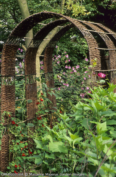 Woven willow tunnel arches, climbing nasturtiums, pink lavatera