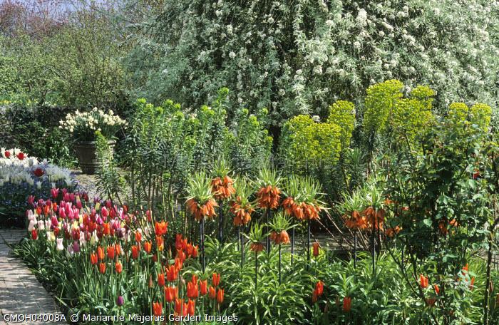 Pyrus salicifolia 'Pendula', Tulipa 'Ballerina', Euphoria griffithii, Fritillaria imperialis, Narcissus 'Mount Hood' in container