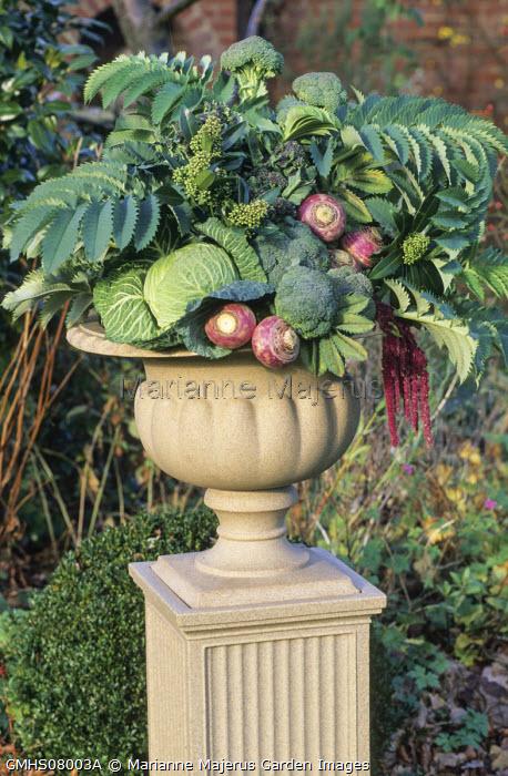 Floral arrangement in classical urn, Melianthus major, broccoli, cabbages, swedes