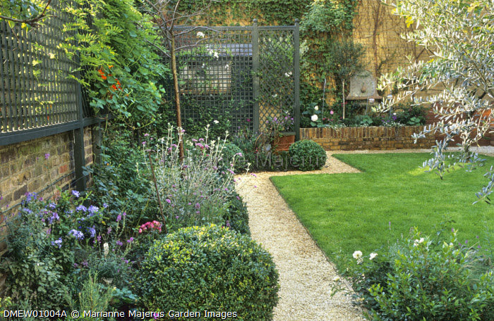 Town garden, gravel path leading around lawn to hidden shed behind trellis screen, olive tree