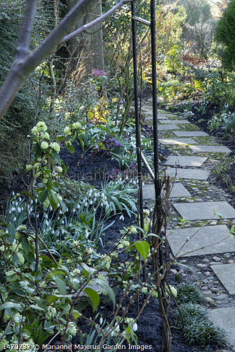 Paving slab and pebble path, wooden chair, snowdrops