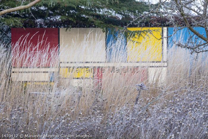 Colourful Mondrian-inspired wall behind grasses, Calamagrostis x acutiflora 'Overdam' and seedheads of Nigella damascena