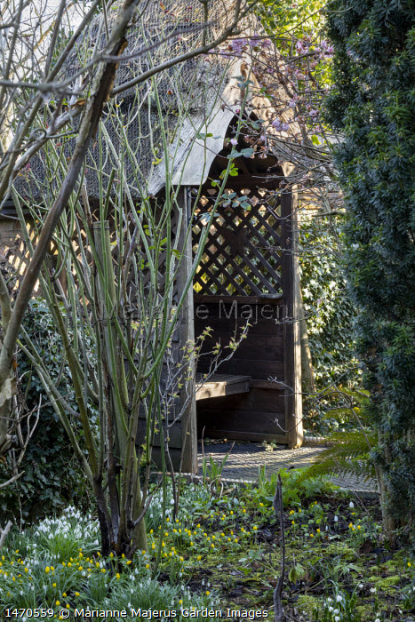 Wooden arbour seat, snowdrops and Winter aconites