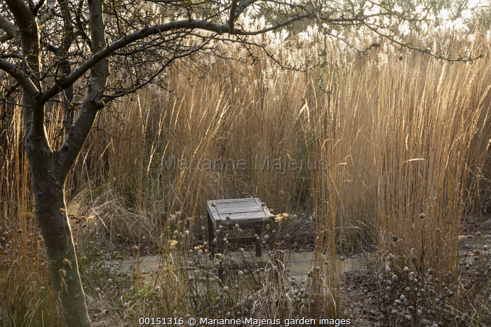 Wooden bench surrounded by Calamagrostis x acutiflora 'Overdam' and seedheads of Nigella damascena