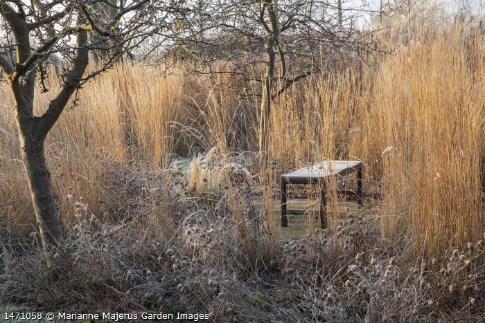 Wooden bench surrounded by grasses, Calamagrostis x acutiflora 'Overdam', Nigella damascena seedheads
