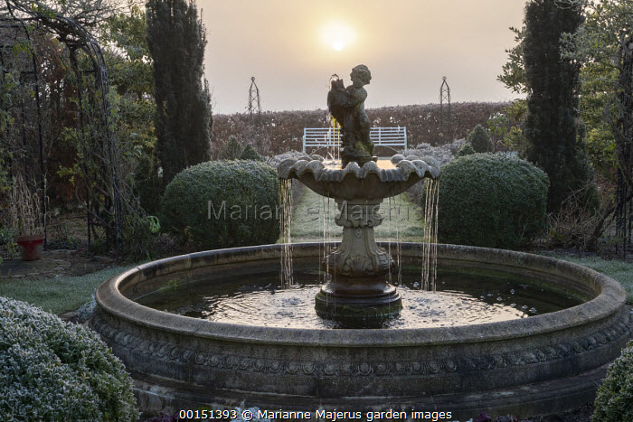 Classical fountain, clipped Buxus sempervirens domes