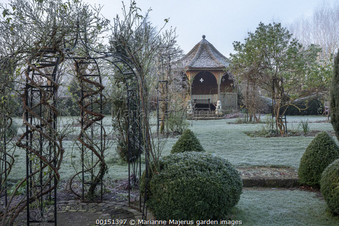 Rose trained over metal arbour, view across frosty lawn to wooden arbour