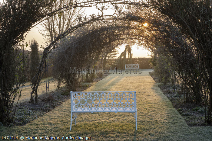 Roses and wisteria trained over metal arch tunnel, grass path leading to bench, framed view