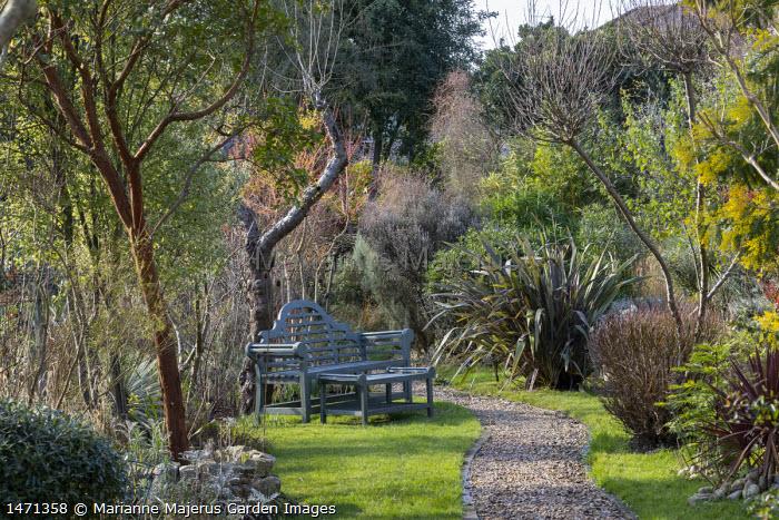 Gravel path, wooden bench and table on lawn, Arbutus unedo, Phormium 'Pink Stripe', Acacia dealbata, Cornus sanguinea 'Midwinter Fire'