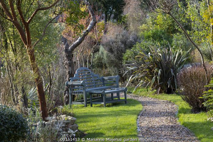 Gravel path, bench on lawn, Phormium 'Pink Stripe', Arbutus unedo, Cornus sanguinea 'Midwinter Fire'