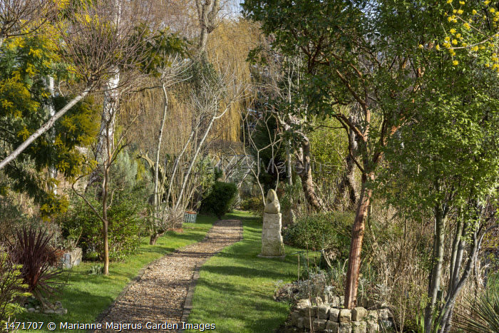 Arbutus unedo, Acacia dealbata, gravel path through narrow garden