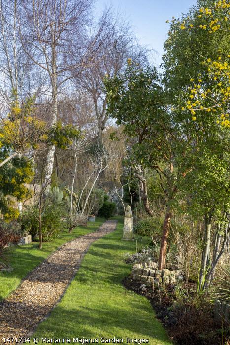 Arbutus unedo, Acacia dealbata, Cornus mas, gravel path through narrow garden