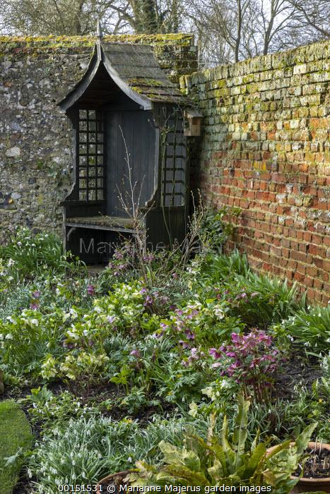 Wooden arbour in corner of shady walled garden, brick wall, Helleborus x hybridus, snowdrops
