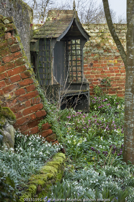 Wooden arbour in corner, brick wall and buttress, Helleborus x hybridus and snowdrops