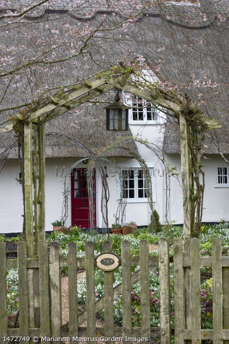 Wooden archway and picket fence, Helleborus x hybridus and snowdrops along path in front garden, thatched cottage