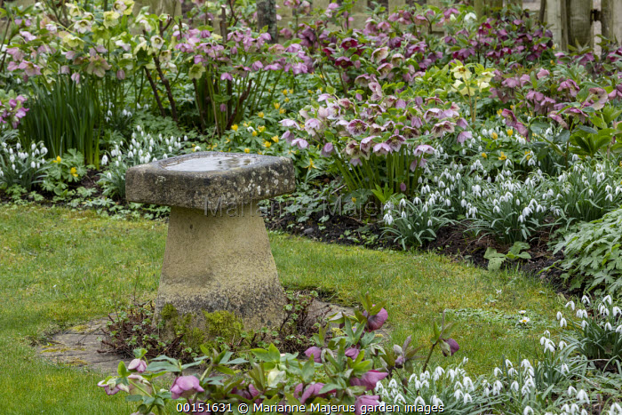 Snowdrops, Helleborus x hybridus, bird bath on lawn