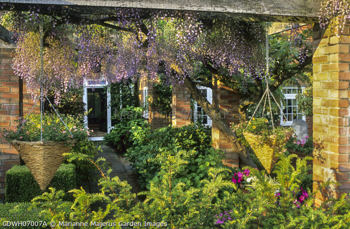 Brick and timber pergola with wisteria, hanging baskets