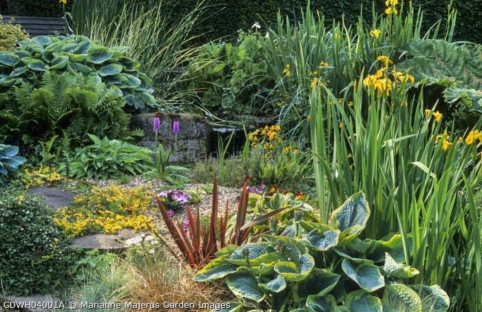 Gravel bed by waterfall, Primula vialii, Hosta sieboldiana 'Frances Williams', phormium, primulas, Iris pseudacorus, violas, ferns