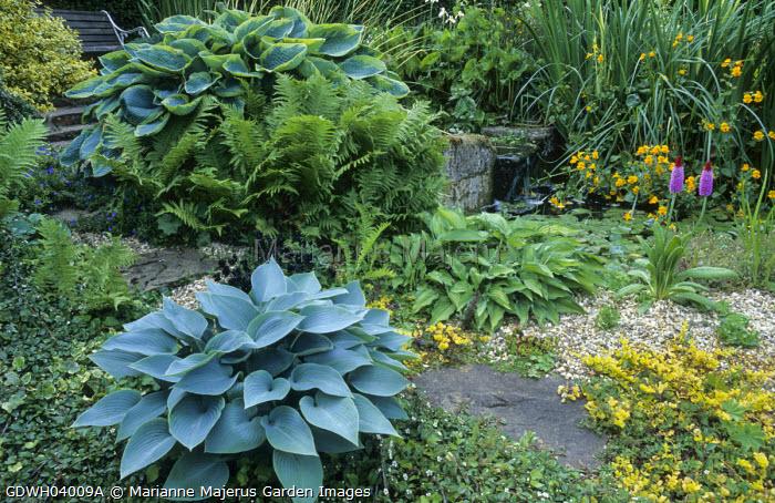 Gravel bed, Primula vialii, hostas, phormium, primulas, Hosta 'Halcyon', Hosta sieboldiana 'Frances Williams'