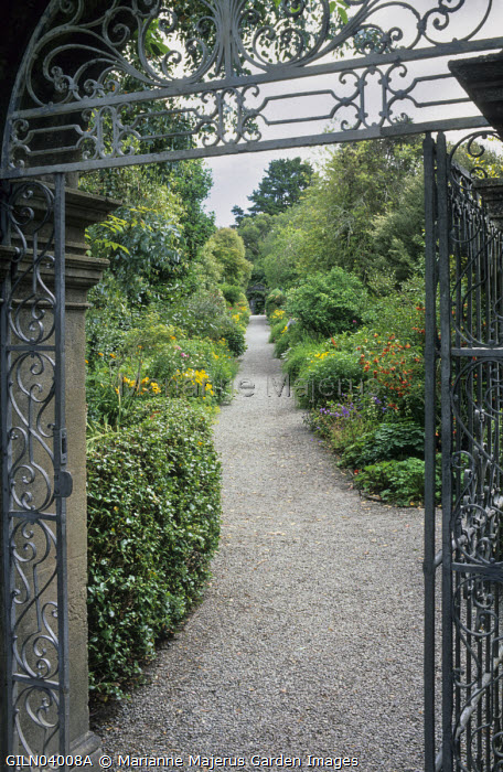 View through gate to kitchen garden, Abutilon 'Ashford Red'
