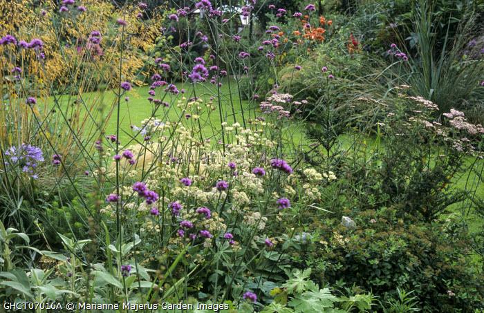 Verbena bonariensis, astrantia, Stipa gigantea